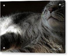 Pet Portrait - Lily Three Acrylic Print