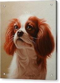 Pet Portrait Of A Cavalier King Charles Spaniel Acrylic Print by Eric Bossik