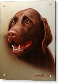 Pet Portrait Of A Chocolate Labrador Acrylic Print by Eric Bossik