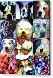 Pet Portraits Acrylic Print by Alene Sirott-Cope
