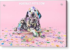 Pet Portraits With A Touch Of Humour Acrylic Print