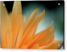 Acrylic Print featuring the photograph Petal Disaray by Greg Nyquist