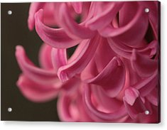 Acrylic Print featuring the photograph Petal Pointing  by Connie Handscomb
