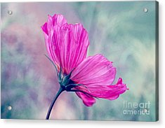 Petalia - 05b Acrylic Print by Variance Collections