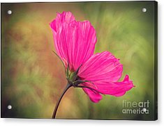 Petalia - 21a Acrylic Print by Variance Collections