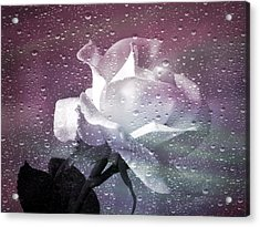 Petals And Drops Acrylic Print by Julie Palencia