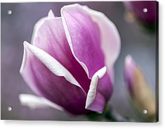 Acrylic Print featuring the photograph Petals by Edward Kreis