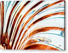Acrylic Print featuring the photograph Petals Of Glass by Wendy Wilton