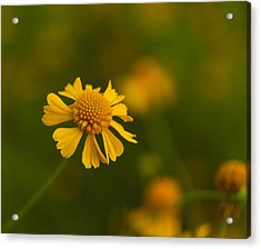 Petals Of Nature Acrylic Print by Christopher L Thomley
