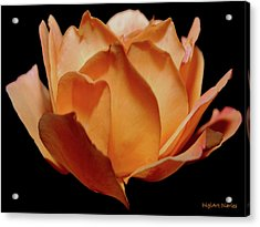 Petals Of Orange Sorbet Acrylic Print