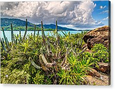 Peterborg Cactus Acrylic Print