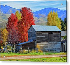 Peterson Barn In Autumn Acrylic Print
