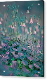 Petites Fleurs Acrylic Print