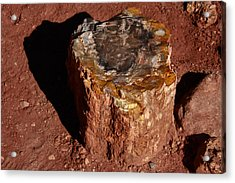 Petrified Forest Acrylic Print