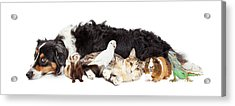 Pets Together On White Banner Acrylic Print by Susan Schmitz