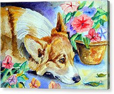 Petunias - Pembroke Welsh Corgi Acrylic Print