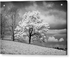 Petworth Tree Acrylic Print by Michael Hope