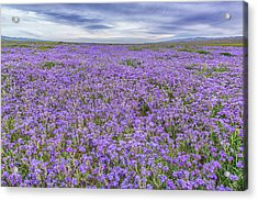Acrylic Print featuring the photograph Phacelia Field And Clouds by Marc Crumpler