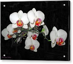 Phalaenopsis Orchids Acrylic Print by Joyce Dickens