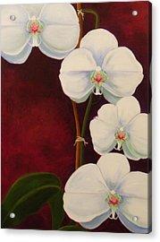 Phaleanopsis Acrylic Print