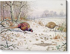 Pheasant And Partridge Eating  Acrylic Print by Carl Donner