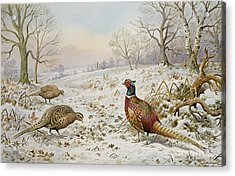 Pheasant And Partridges In A Snowy Landscape Acrylic Print by Carl Donner