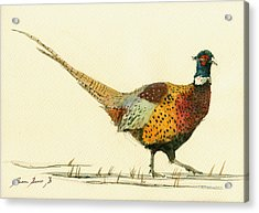 Pheasant Bird Art Acrylic Print