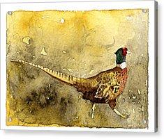 Pheasant Acrylic Print by Eunice Olson