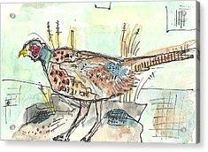 Pheasant Acrylic Print by Matt Gaudian