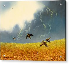 Pheasants On The Rise Acrylic Print by Don Griffiths