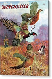 Pheasants On The Rise Acrylic Print by Lynn Bogue Hunt