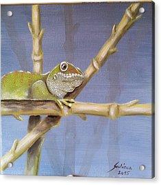 Phelsuma Gecko Acrylic Print by Judit Szalanczi