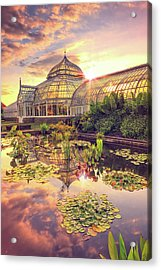 Lilys At Phipps  Acrylic Print