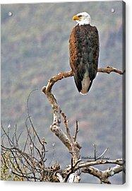 Phoenix Eagle Acrylic Print