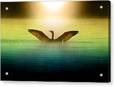 Phoenix Rising Acrylic Print by Rob Blair