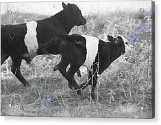 Photo Finish Acrylic Print by Donna Kennedy