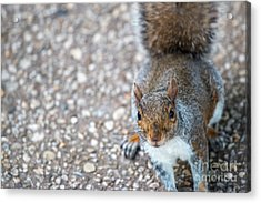 Photo Of Squirel Looking Up From The Ground Acrylic Print