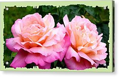 Acrylic Print featuring the photograph Photogenic Peace Roses by Will Borden