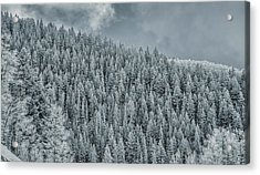 Acrylic Print featuring the photograph Winter Pines by Lou Novick