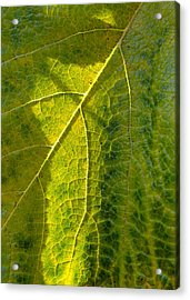 Photosynthesis In Progress Acrylic Print by Everett Bowers