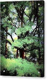 Photosynthesis Acrylic Print by Jill Tennison