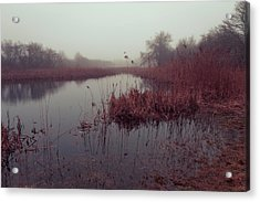 Acrylic Print featuring the photograph Phragmites And Fog by Andrew Pacheco