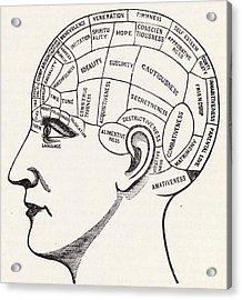 Phrenology Acrylic Print by English School
