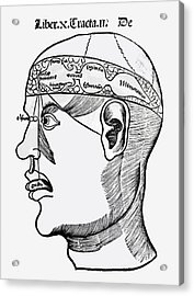 Phrenology Acrylic Print by French School