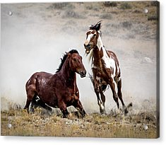 Picasso - Wild Stallion Battle Acrylic Print by Nadja Rider