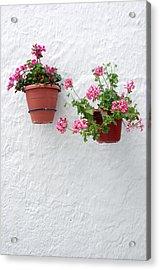 Picena 16 Acrylic Print by Jez C Self