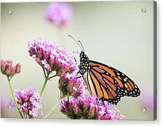 Acrylic Print featuring the photograph Picking Flowers 2 by Brian Hale