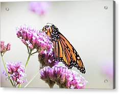 Acrylic Print featuring the photograph Picking Flowers by Brian Hale