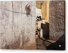 Acrylic Print featuring the photograph Picturesque by Marji Lang