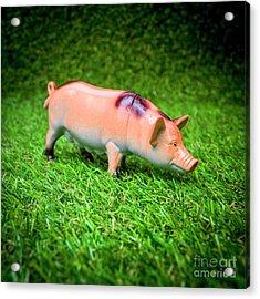 Pig Figurine Acrylic Print